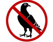Taubenabwehr ecopic 2 - Vermeiden Sie Unannehmlichkeiten mit Tauben und anderen Vögeln